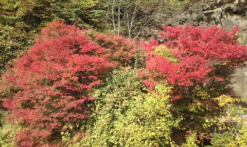 2009年10月29日吉野紅葉 001.jpg