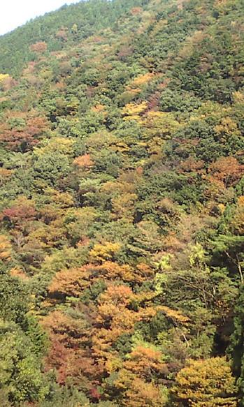 2009年10月29日吉野紅葉 002.jpg