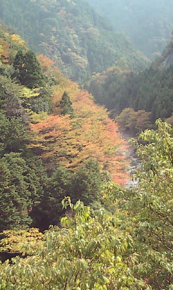 2009年10月29日吉野紅葉 003.jpg