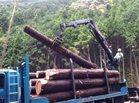 会社近くの木材搬出風景 006.jpgのサムネール画像