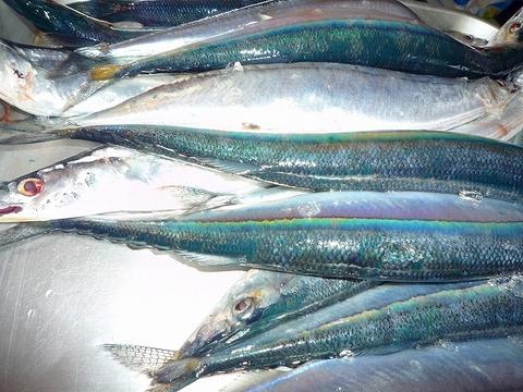 mami-2010年9月北海道の秋刀魚 001.jpg