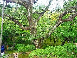 mami-mami-2010年10月3~4日京都にて 018.jpg