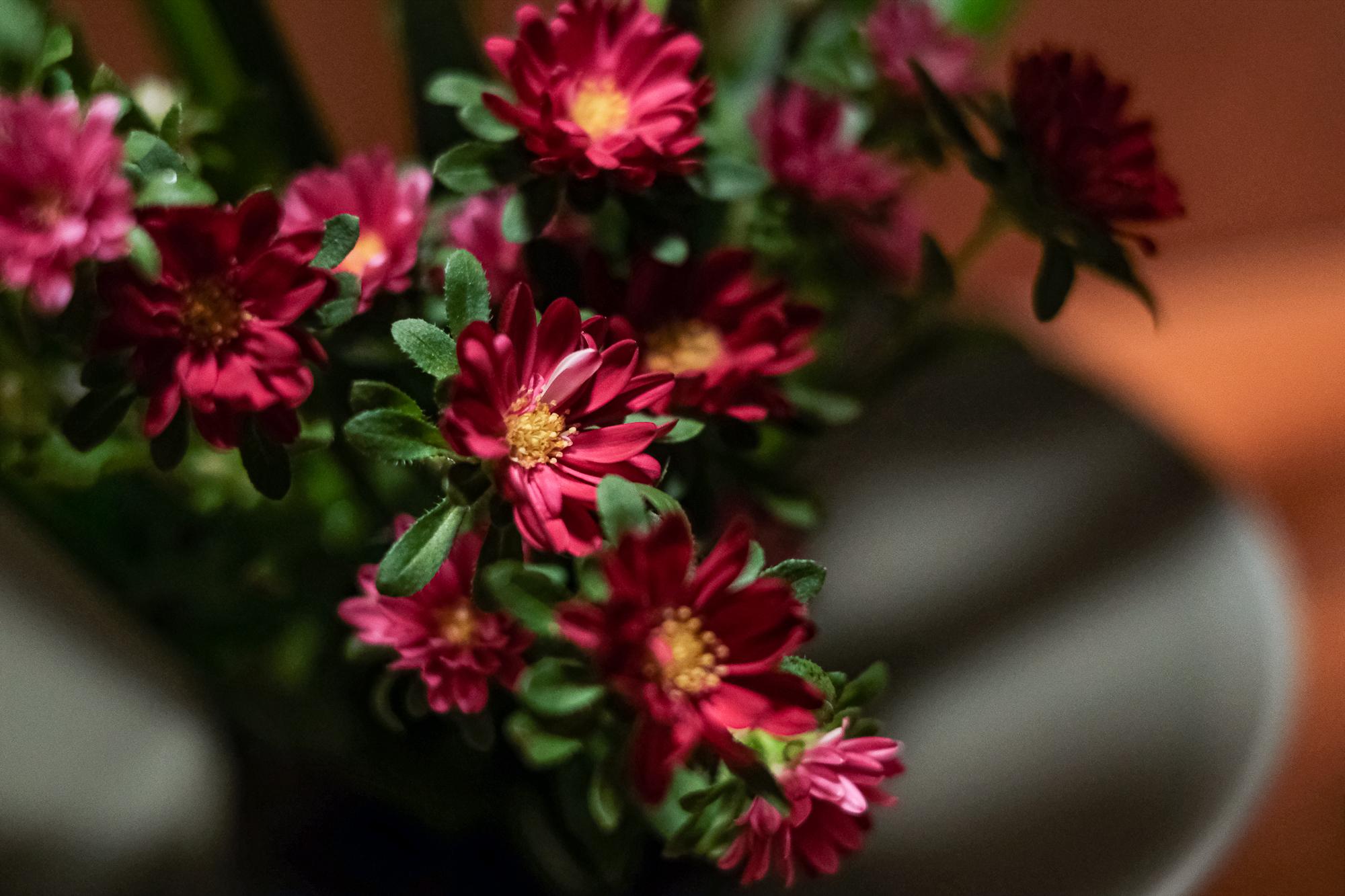 アスターのお花。足元にさりげなく使うけど、アップで見るととてもかわいい